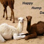 53640-Happy-Hump-Day